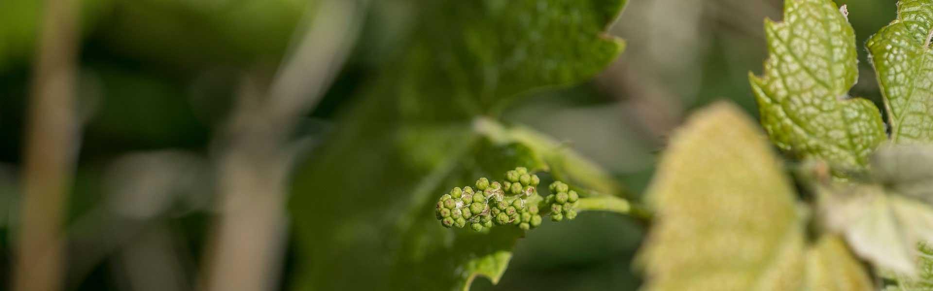 Actiesite nodig florido ontwikkelt snel en effectief - Ontwikkel een grote tuin ...